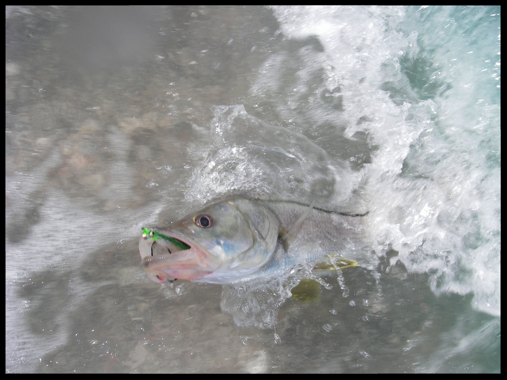 Snook with fly enhansed